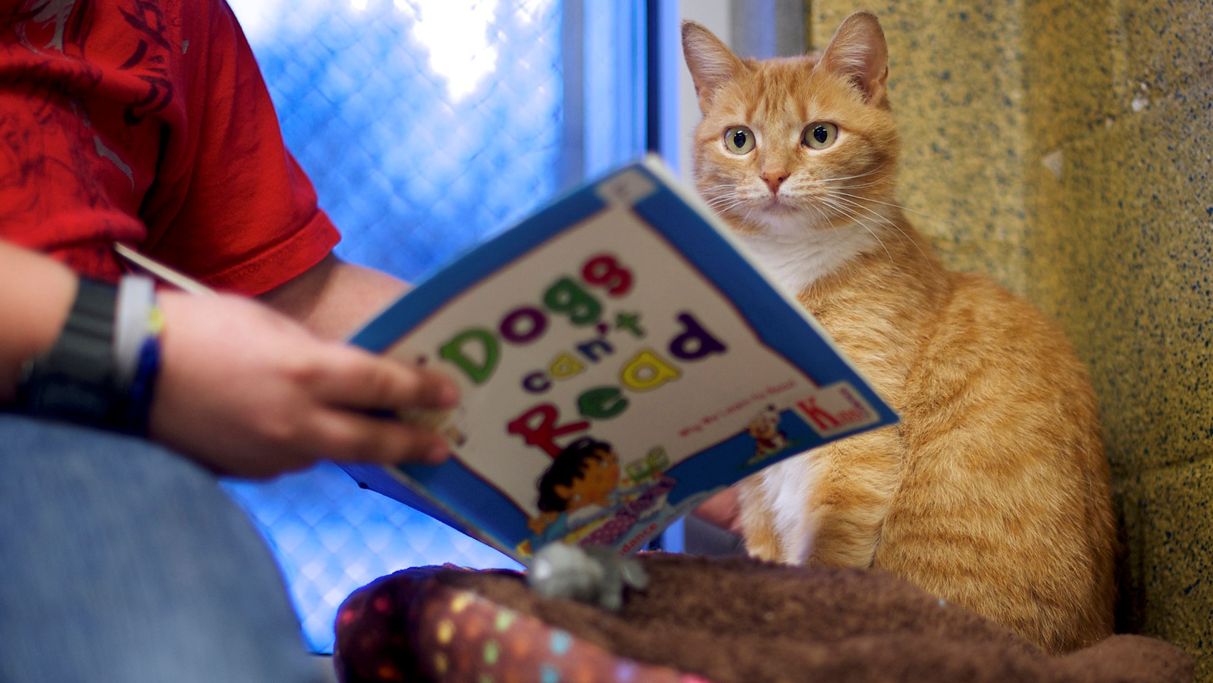 Child reading to cat